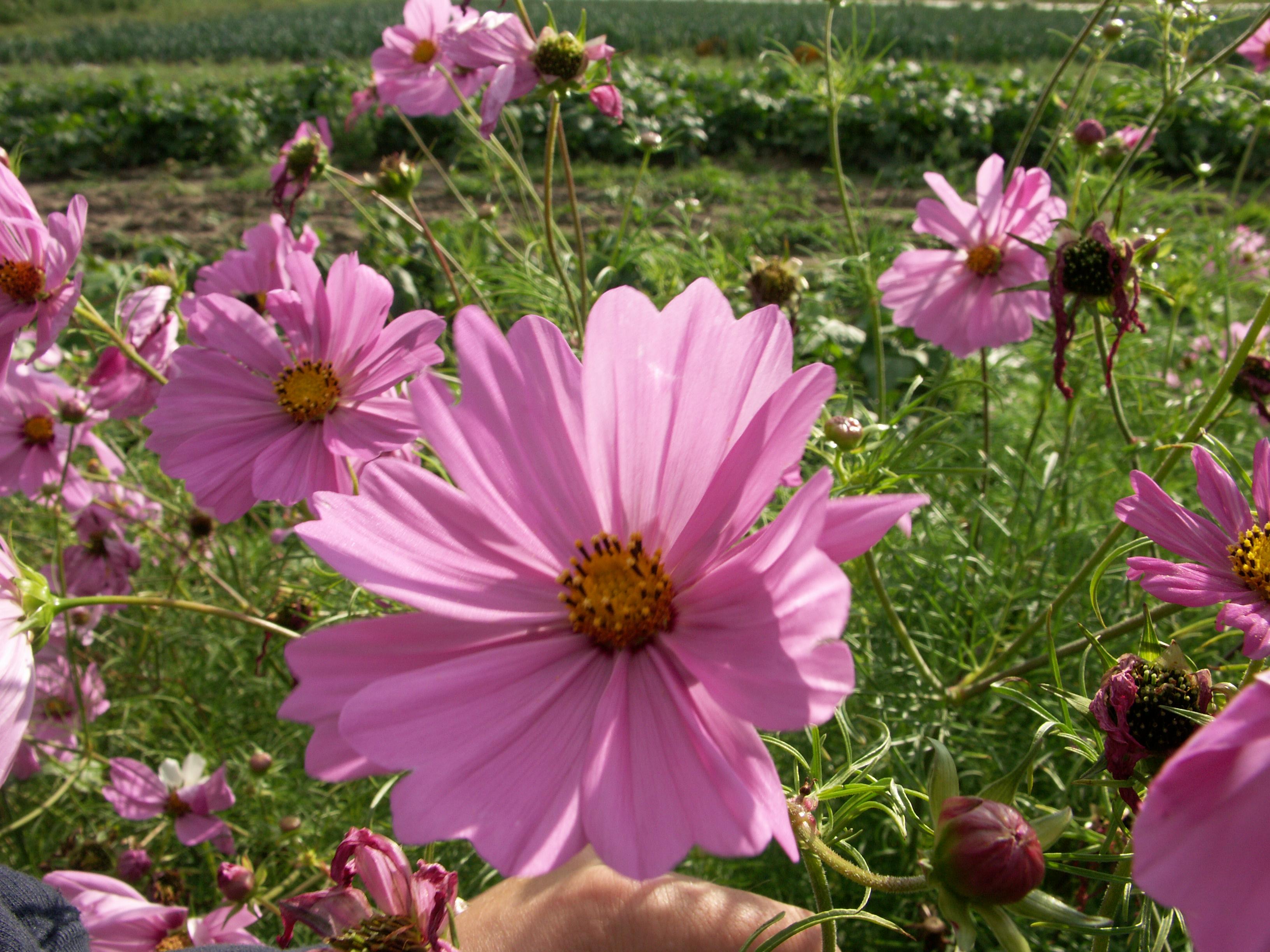 Helfende Hand in Haus und Garten